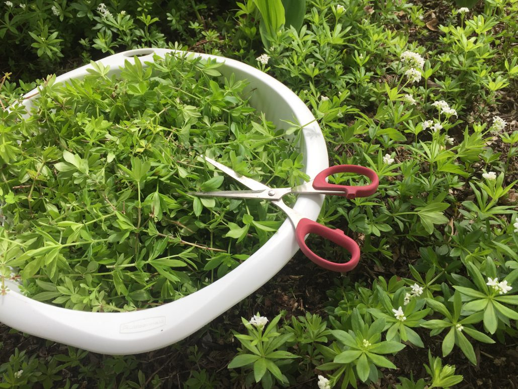 Preparation of the sweet woodruff syrup
